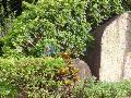 莲城花园小区图片
