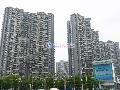 碧海富通城五期小区图片
