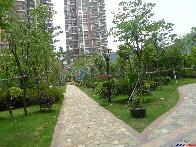阳光玫瑰园